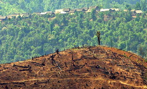 damaged through deforestation