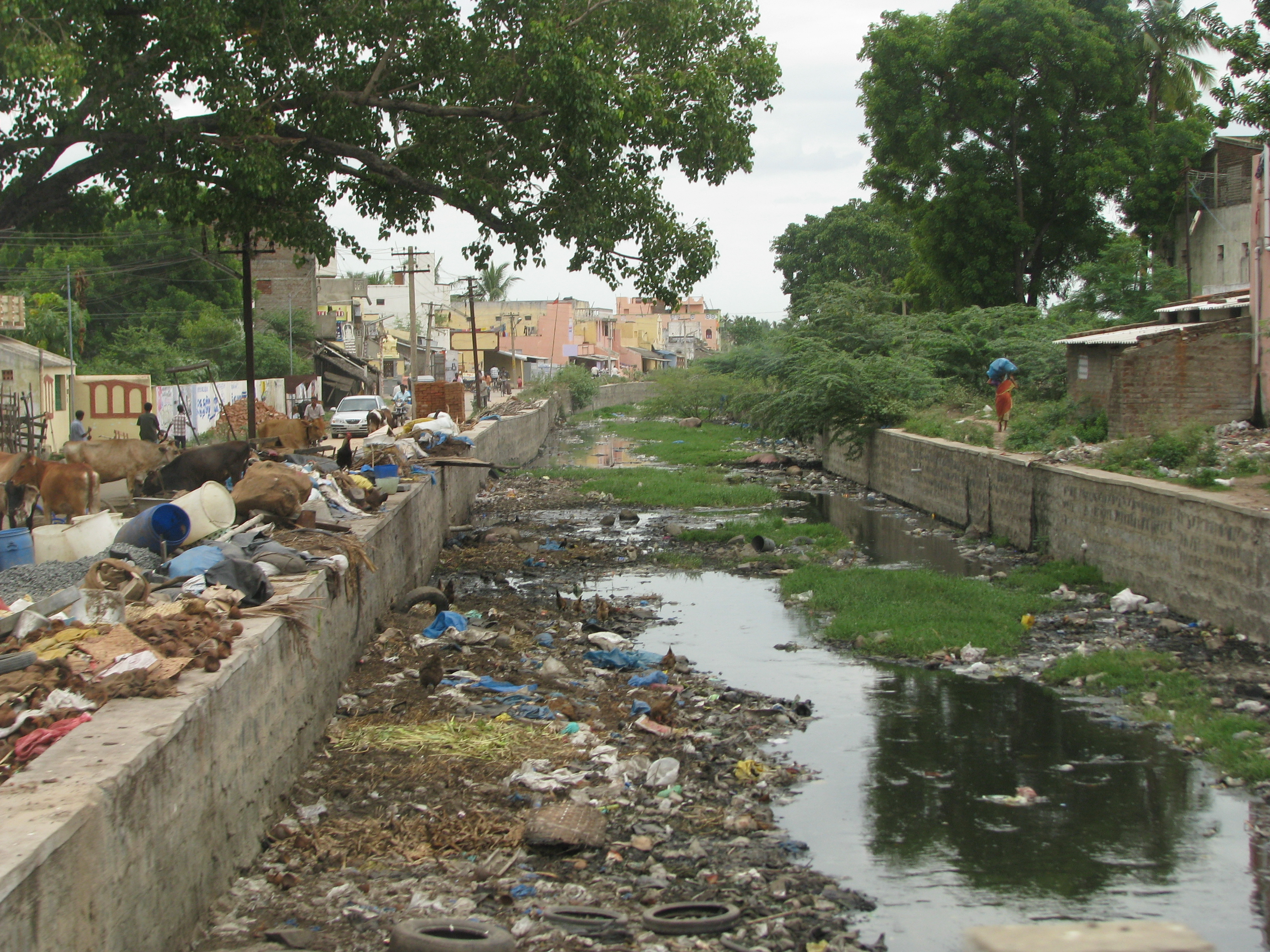degradation of bangalore lakes