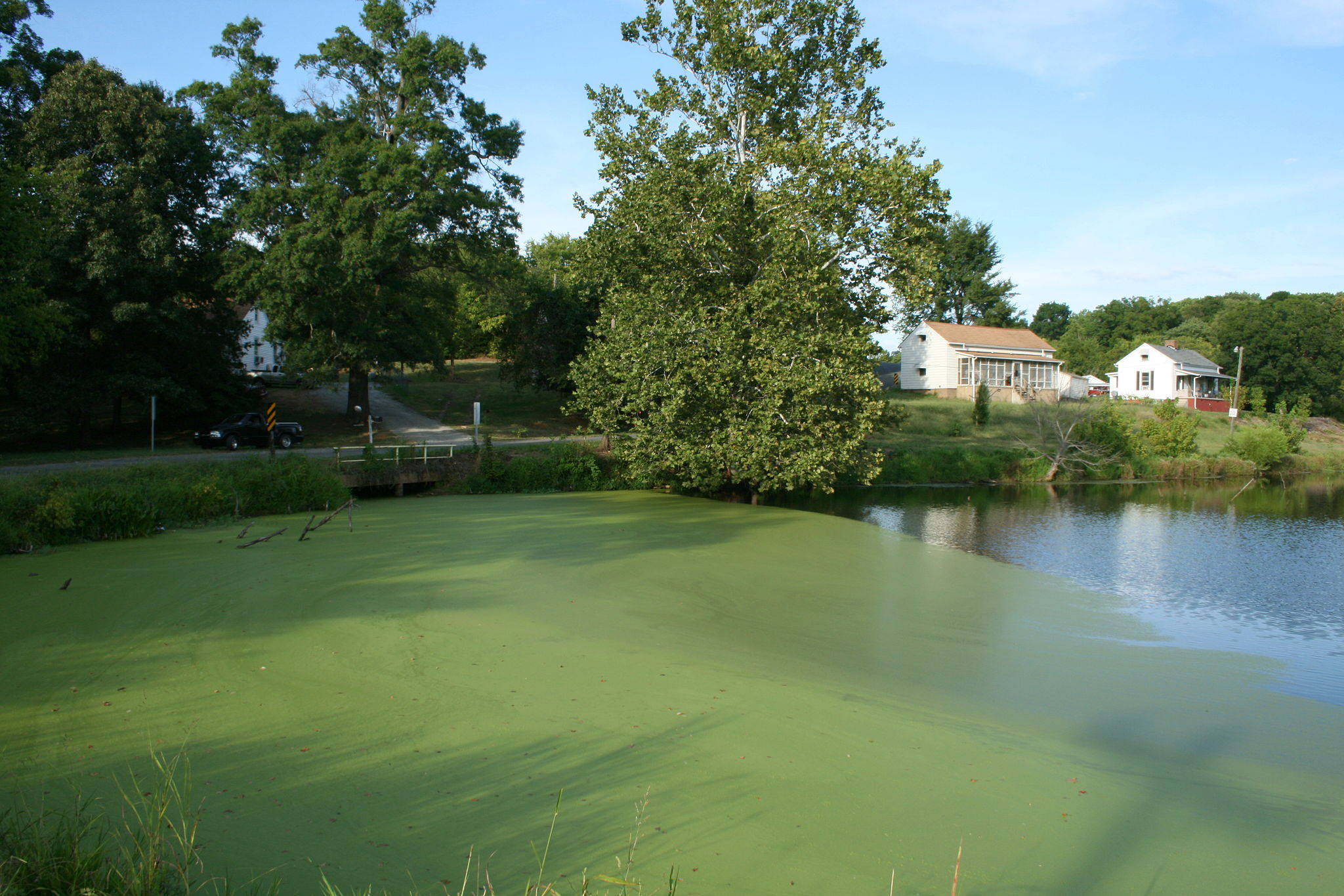 the effects of algae overgrowth