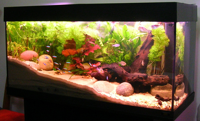 cheap 5 gallon fish tanks you should definitely check out