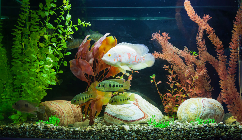 Which is the best filter media for freshwater aquarium for Distilled water for fish tank