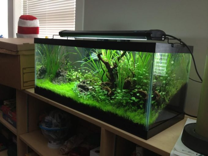 Awesome 30 gallon long fish tanks for sale online take ur for Used fish tanks for sale many sizes