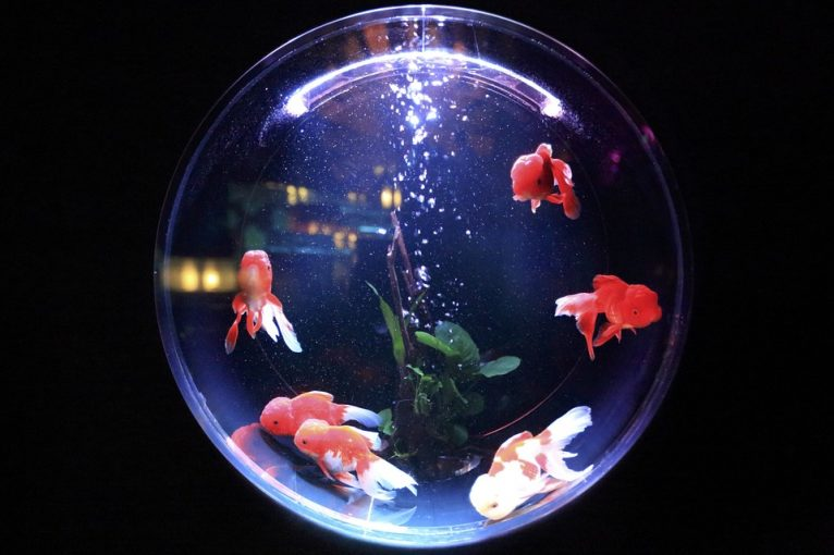 5 large plastic fish bowls perfect for small fish owners for Small fish bowl