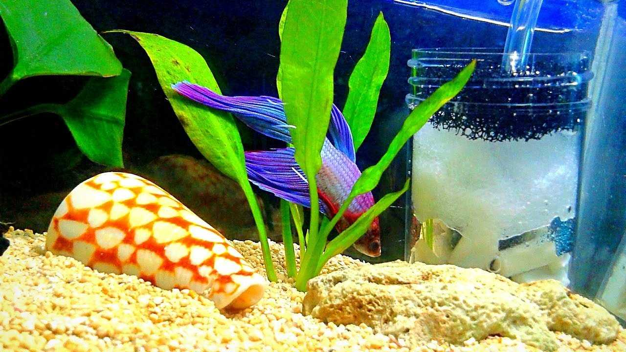 Which is the best filter for an aquarium to choose