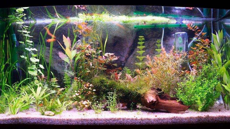 Top 5 petsmart fish tank filter types pros cons comparison for How to keep fish tank clean without changing water